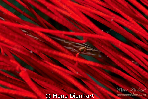 RED! by Mona Dienhart 